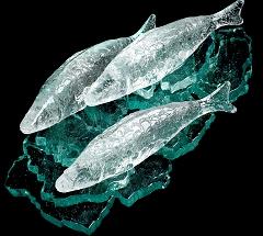 Fish by Eva Kelly