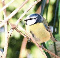 County Kildare Biodiversity Plan