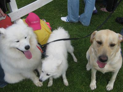 county-show-dogs.jpg