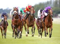 curragh-racing