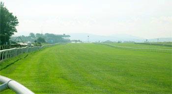 curragh_racecourse_rails_md.jpg