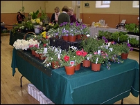 flowers at Naas Country Market