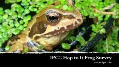 frog-survey-2011