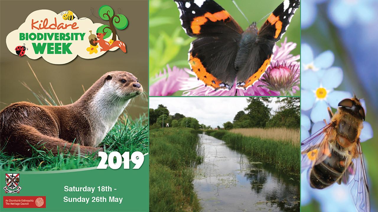 Kildare Biodiversity Week 2019