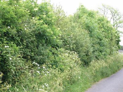 Derrybeg Farm Talk and Walk