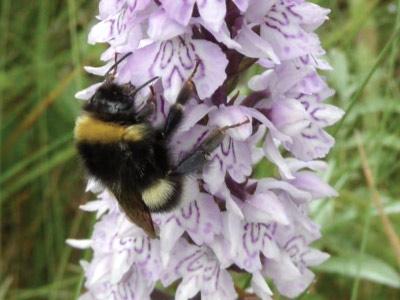 Maynooth University Biodiversity Day