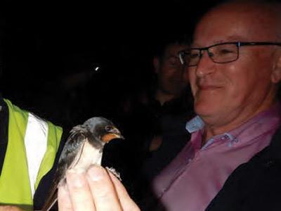Ringing Swallows: Pollardstown Fen