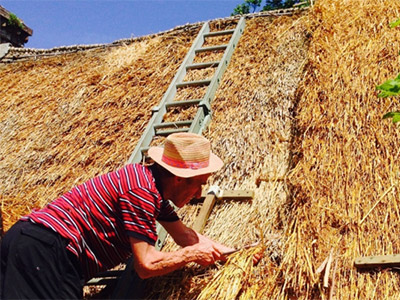 Thatching Demo Yew Cottage