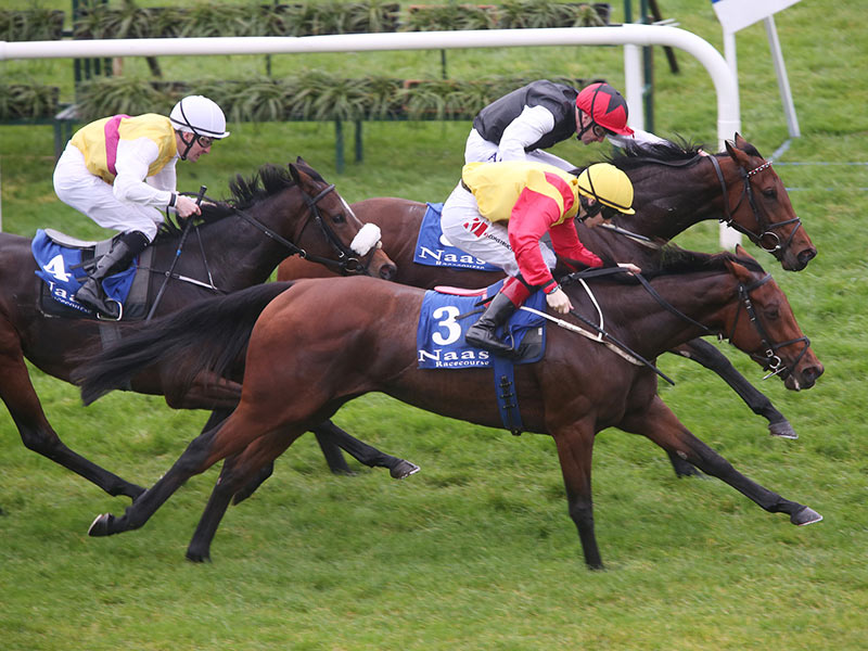 Rathasker Stud Day at Naas Racecourse