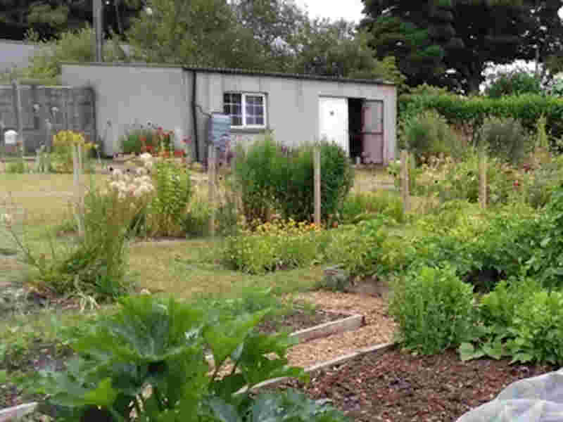 Growing Food in the Home Garden
