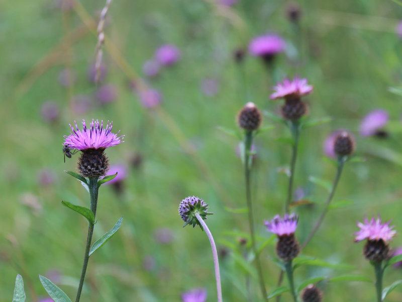 Launch of Kildare Community Biodiversity Project