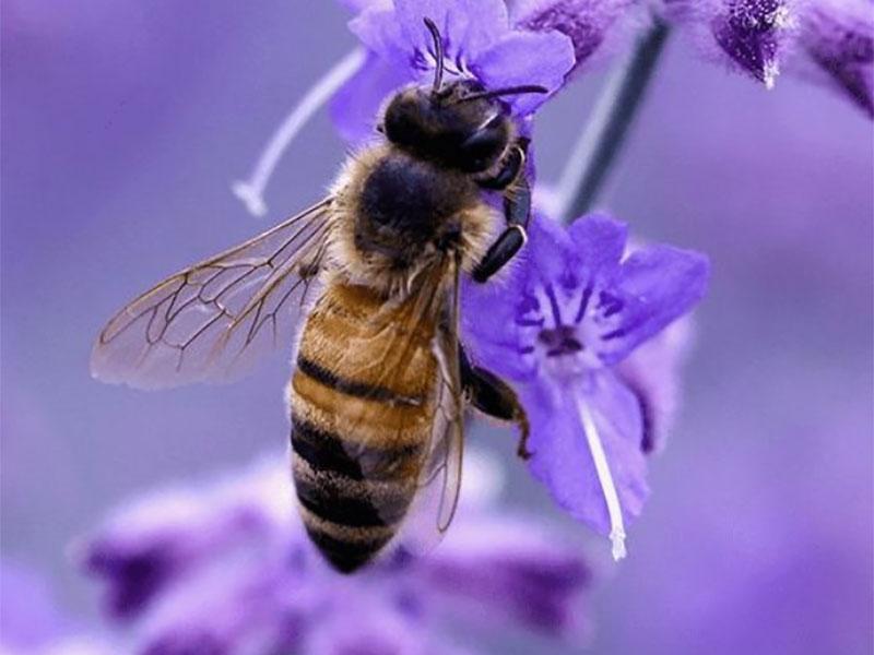 North Kildare Beekeepers Demo