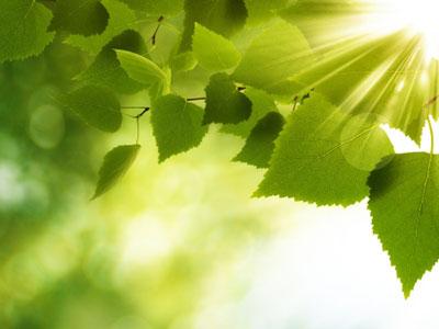 An Taisce's Climate Ambassador Programme for 2019