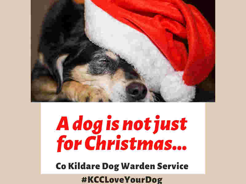 Be a Responsible Dog Owner This Christmas