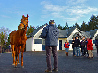 5 Kildare Stud Farms in 2017 Irish Stallion Trail