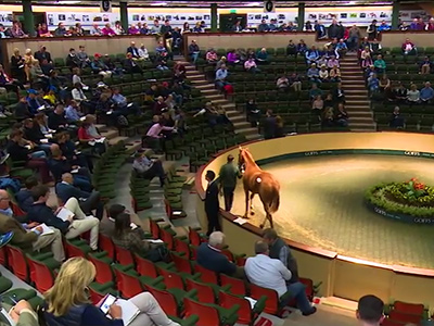 Record Year for Goffs as Turnover Tops 170 Million