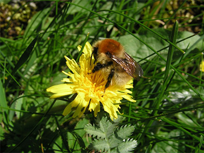 Pollinator Training - Tues. 11th April 2017